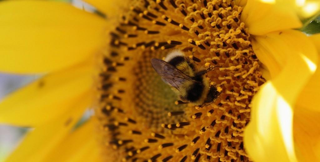 trappola-piglia-polline